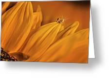 Starry Sunflower Greeting Card