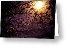 Stars In An Earthly Sky Greeting Card by Vivienne Gucwa