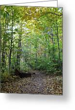 Starved Rock Number 24 Greeting Card