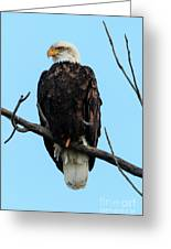 Stately Eagle Greeting Card
