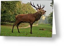 Stately Stag Greeting Card