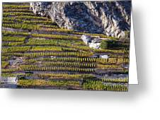Steep Slope Viticulture In Valais Canton Greeting Card