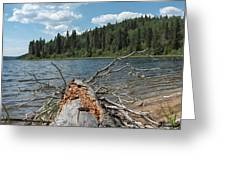 Steepbanks Lake The Fallen Greeting Card
