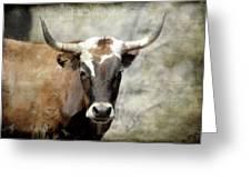 Steer Bull Greeting Card