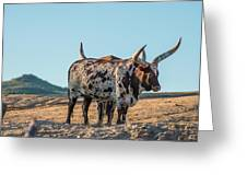 Steers In The Desert Greeting Card