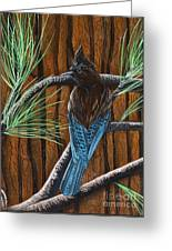Stellar Jay Greeting Card