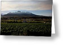 Stellenbosch Vineyard Greeting Card