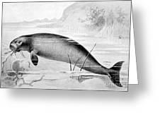 Stellers Sea Cow, Extinct Greeting Card