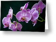 Stem Of Orchids  Greeting Card