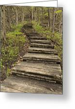 Step Trail In Woods 17 A Greeting Card