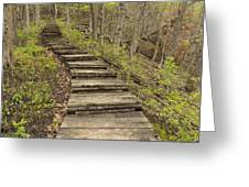 Step Trail In Woods 17 B Greeting Card