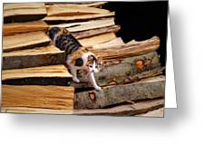 Stepping Down - Calico Cat On Beech Woodpile Greeting Card