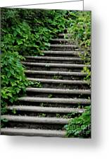 Steps With Ivy Greeting Card