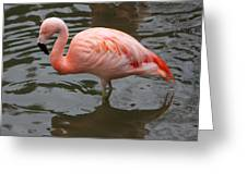 Stern Flamingo Greeting Card