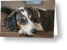 Stewie - Family Dog Greeting Card