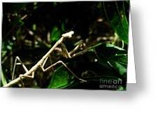 Stick Insect Greeting Card