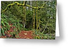 Sticking Out In The Rain Forest Greeting Card
