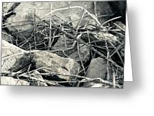 Sticks And Stones 2782 Greeting Card
