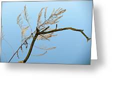Sticks Greeting Card