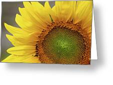 Still Blooming Greeting Card