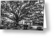 Still Faithful B W God Bethany Presbyterian Church The Old Oak Tree Greene County Georgia Art Greeting Card