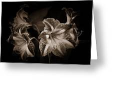 Still. Life. Colorless. Flowers. Greeting Card