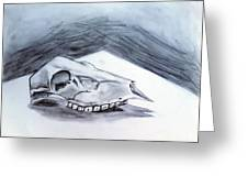 Still Life Drawing Cow Skull 02 Greeting Card