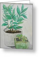 Still Life Plants Greeting Card
