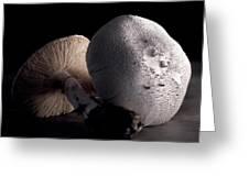 Still Life Two Mushrooms Greeting Card