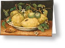 Still Life With Bowl Of Citrons Greeting Card