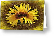 Still Life With Sunflower Greeting Card