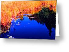 Still Water Beside The Forest 3 Ae32  Greeting Card