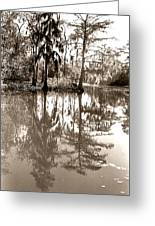Stillness In The Glades Greeting Card