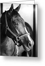Horse And Stillness Greeting Card