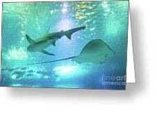 Sting Ray And Shark Greeting Card