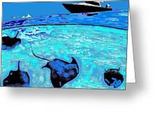 Stingray Bay Greeting Card