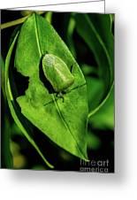 Stink Bug On Leaf Greeting Card