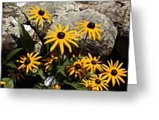 Stone Flowers Black Eyed Susan Greeting Card