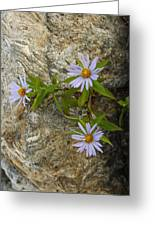 Stone Flowers Blue Greeting Card