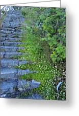 Stone Steps Greeting Card