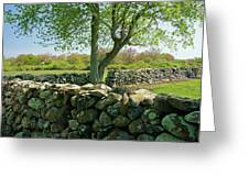 Stone Wall In Rhode Island Greeting Card