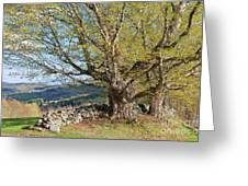 Stone Wall Spring Landscape Greeting Card