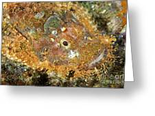 Stonefish Greeting Card