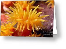 Stony Cup Coral Greeting Card