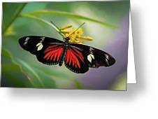 Butterfly, Stop And Smell The Flowers Greeting Card by Cindy Lark Hartman
