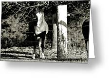 Stopping For A Pose - Southern Indiana Greeting Card