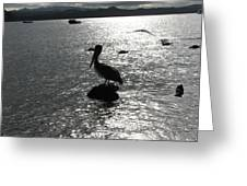 Stork At Evening Greeting Card