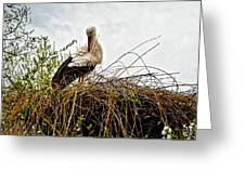 Stork Nest Greeting Card