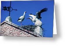 Storks Of Segovia Greeting Card