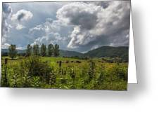 Storm And Cattle Greeting Card